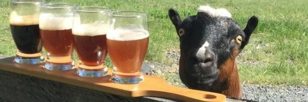 Happy goat with paddle of beers at Beard and Brau microbrewery