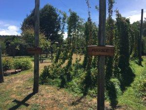 Seven Sheds Hop Garden