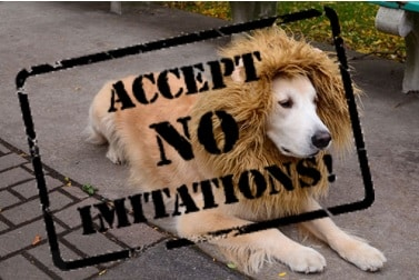 accept no imitation lions