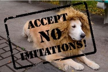 accept no imitation lions